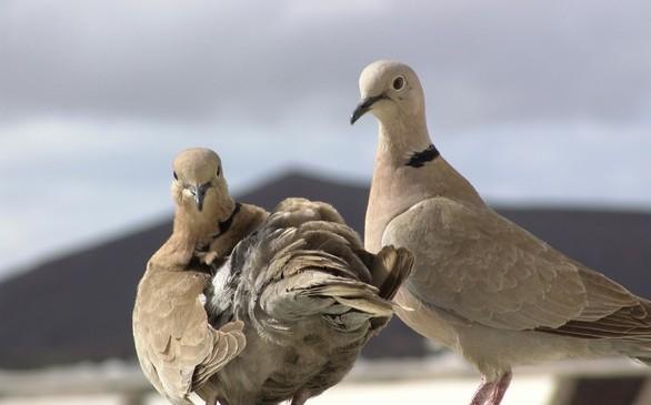 Wplyw-zmian-klimatu-na-ptaki-Europy